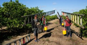 Heat Wave Hits Florida – and Its Unprotected Farmworkers
