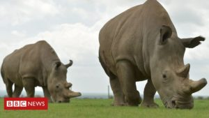 The audacious plan that could save a species