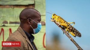 Coronavirus in Africa: Locusts add to food security concerns