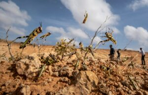 Outskirts of Somalia's Capital is Under Siege by Damaging Locusts | Voice of America