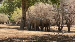 Read more about the article Zimbabwe NGO Sues Gov't Over Alleged Planned Export of Elephants to China   Voice of America